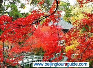 Fall Foliage at Xiangshan Park
