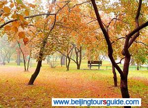 Xiangshan Park in Autumn